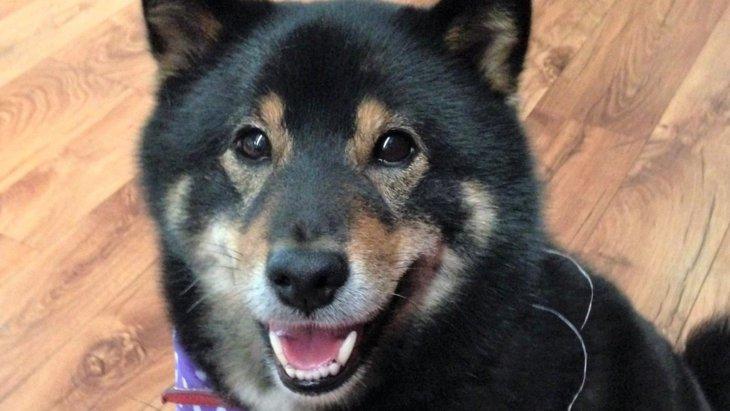 愛犬が他の犬に唸る意外な理由が判明!|LAYLAのペットリーディング