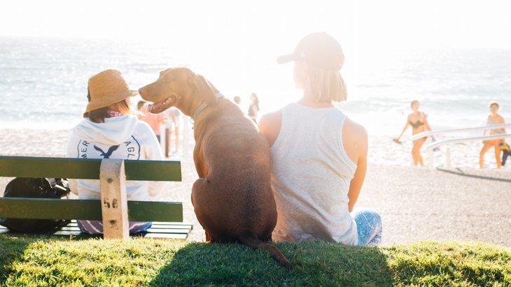 犬の散歩で飼い主もダイエット!効果を期待できる方法5つ