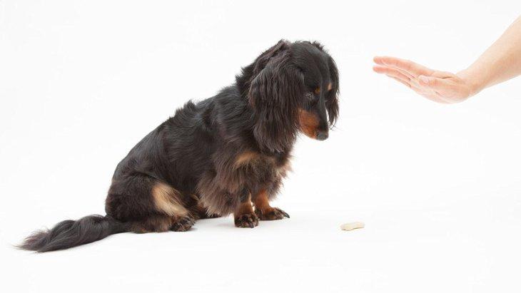 犬の「待て」のトレーニングのやり方!時期や教え方、上手くいかない原因と解決方法まで