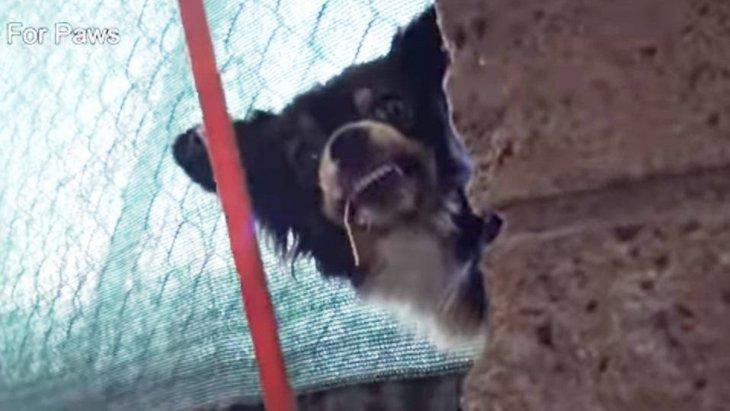 子犬6匹の大所帯を保護。母さん犬は守るために必死の威嚇!