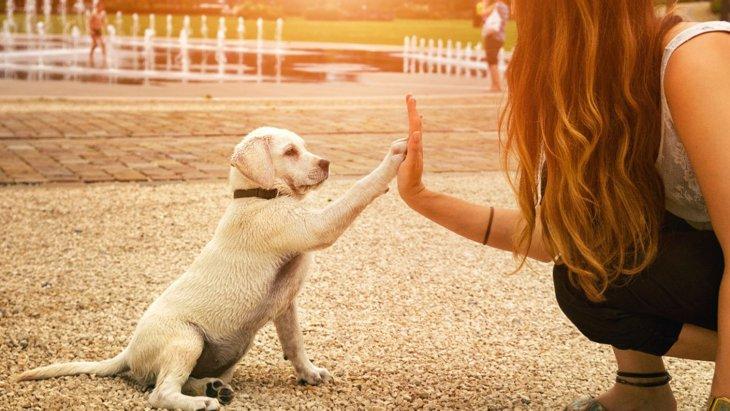 『しつけが出来ていない犬』の特徴3選