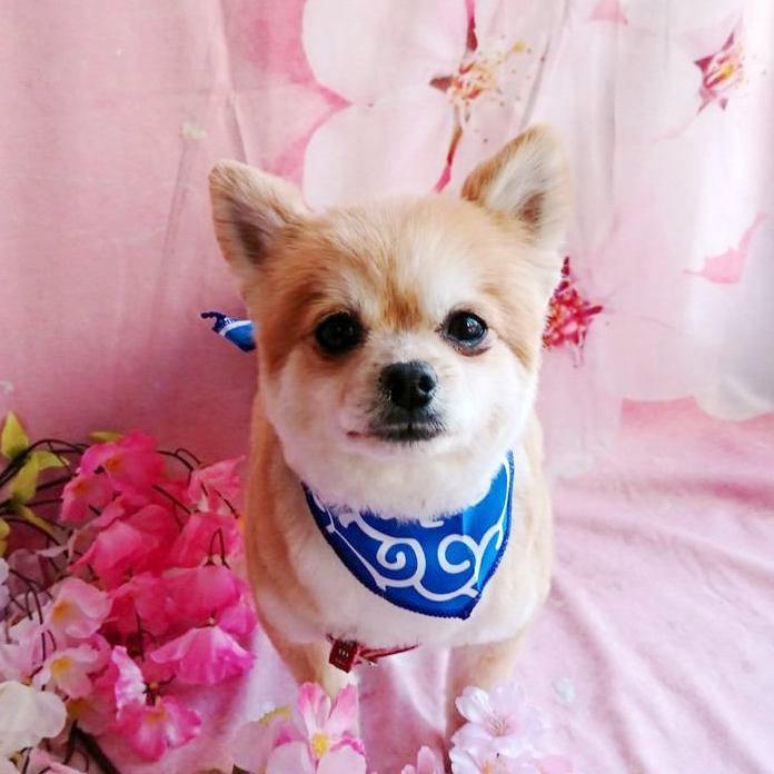 愛犬が来客に吠えるのは治安維持のため!?|Laylaのペットリーディング