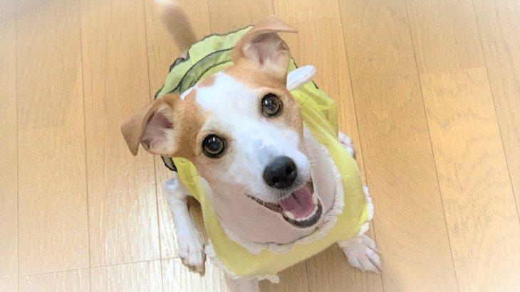 愛犬はいつでもママの気持ち最優先!|LAYLAのペットリーディング