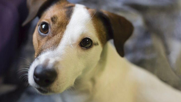 家族になろう!保健所から犬を迎える方法