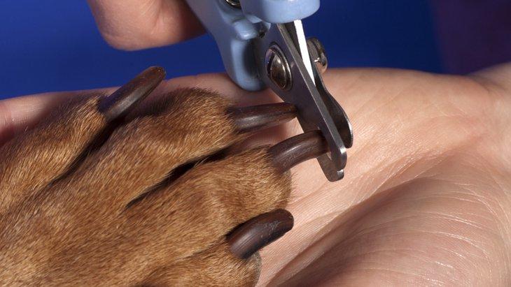 犬の爪切りで黒い爪を切る方法!準備するものから注意点まで