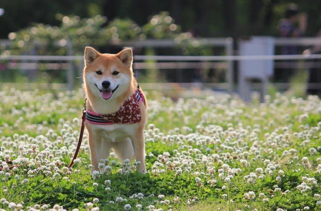 犬と公園を楽しむために守りたい5つのマナー