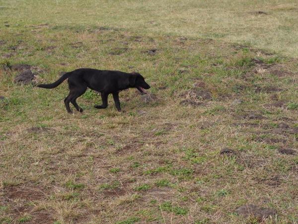 保護犬の里親になる方法・準備・注意点