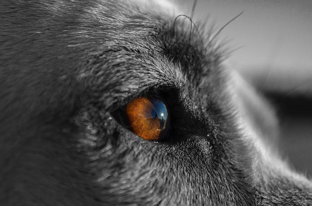 犬から見たテレビは「コマ送り」!?驚くべき犬の動体視力とは