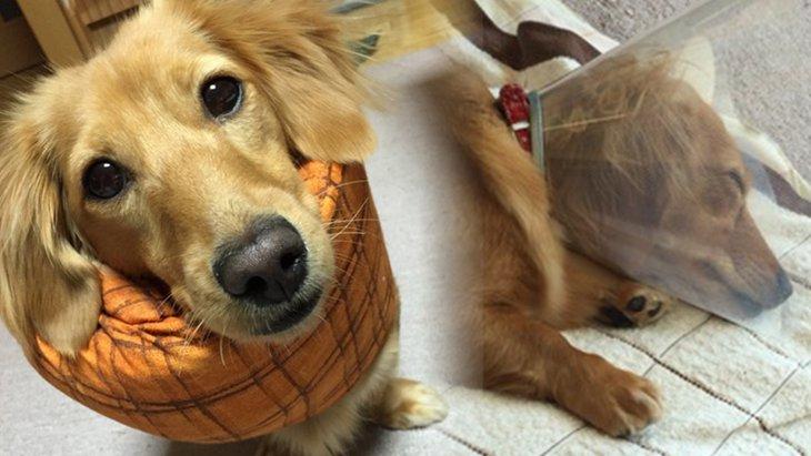 我が家の愛犬に『避妊手術』をすることにしたきっかけ