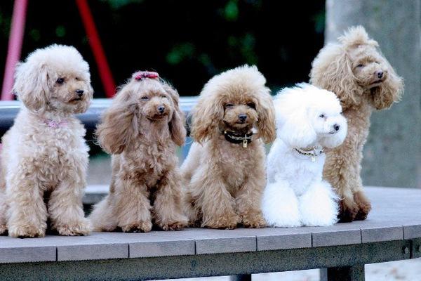 犬の多頭飼いのときに気をつけたい3つのポイント