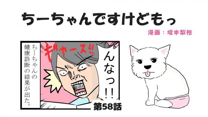 ちーちゃんですけどもっ【第58話】「シニア犬であること」