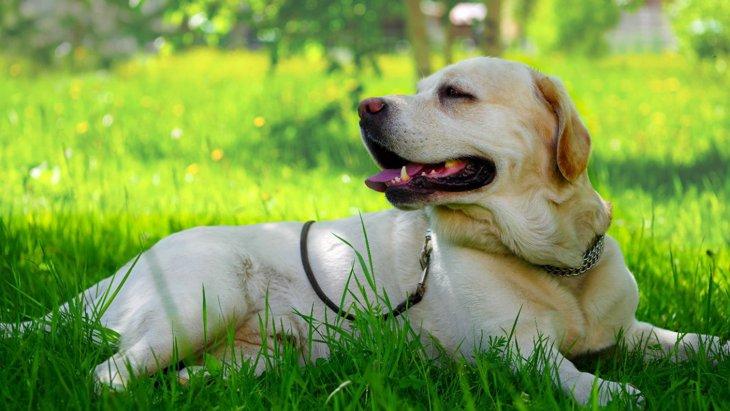 犬が『熱中症』になっている時に現れる初期症状5選
