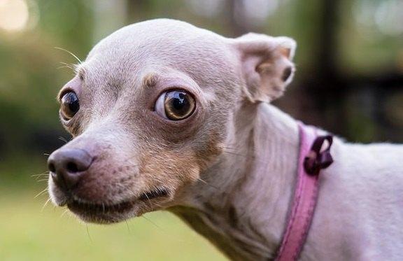犬が『しっぽを下げる』心理5つ