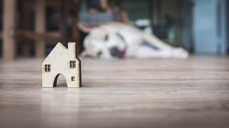 室内での犬小屋・ハウスのおすすめ5選!その価格や置き場所など
