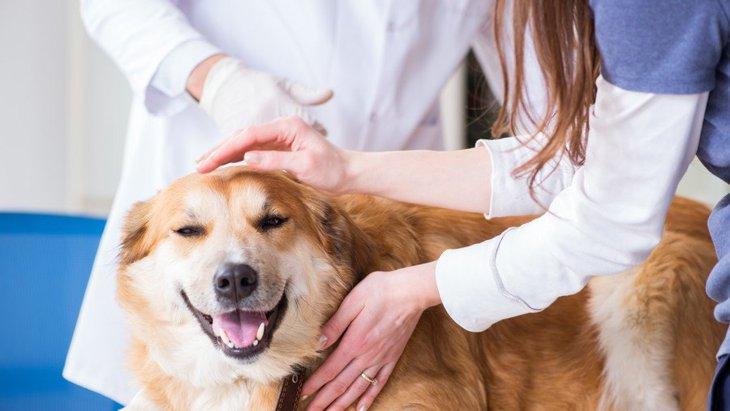 犬が『熱中症』になっている時の初期症状4選