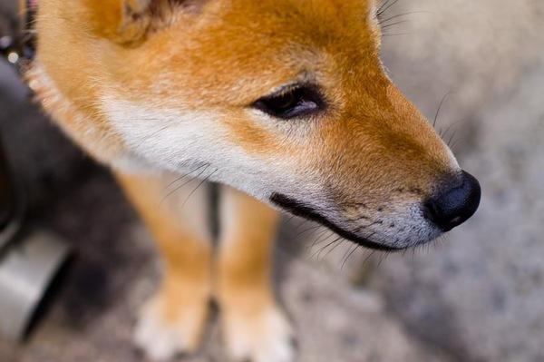 賛否両論!?手間がかかる犬の方が飼い主と固い絆で結ばれるって本当?