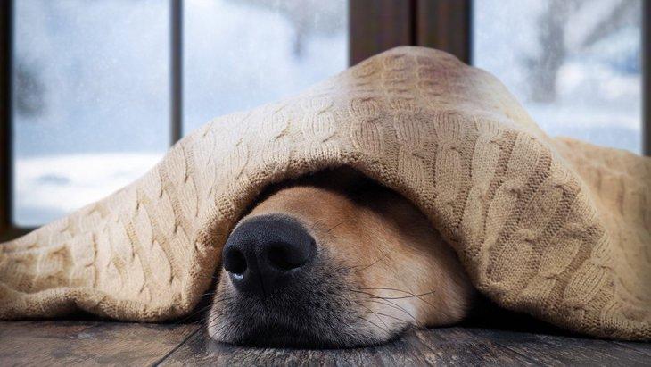 寒い季節に多い犬の病気3選