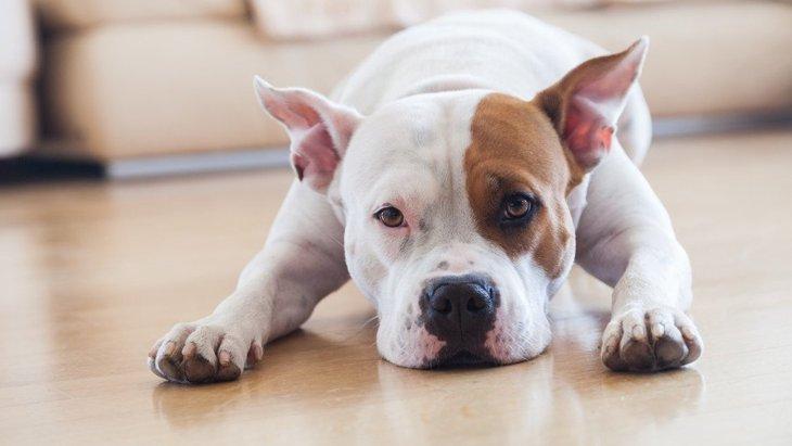 犬にしつけをするのがかわいそう…ストレスに繋がったりしないの?