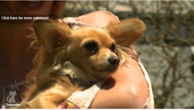 シェルターに愛犬収容、$20の手数料の支払いを拒否した飼い主