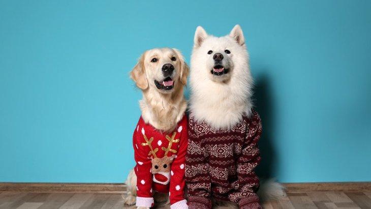 犬に冬服は必要?その必要性や活用法、おすすめ商品まで