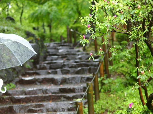 梅雨は犬が病気になりやすい季節!予防法と治療法