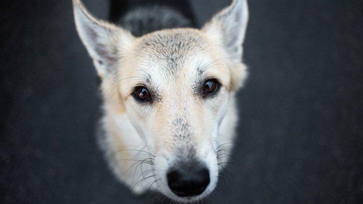 犬の気持ちは『鳴き声』でわかる!3つのパターンとやるべき対処法