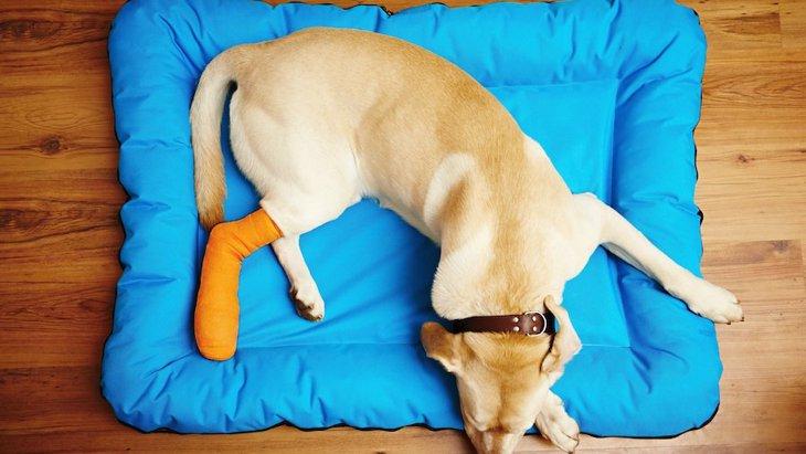 犬が足を怪我している時にする仕草5つ