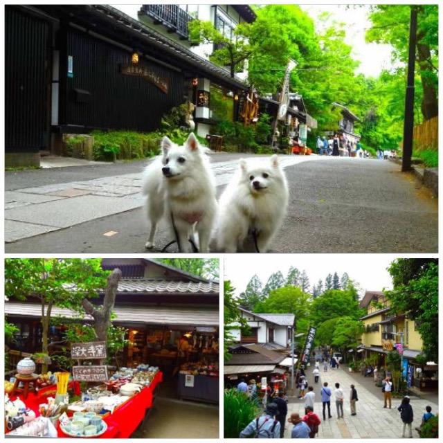 愛犬と一緒にドッグランや蕎麦の食べ歩き、夏でも涼しい深大寺散策