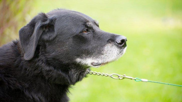 犬が飼い主に『嫌だ!』と伝えている時にする態度や仕草4選