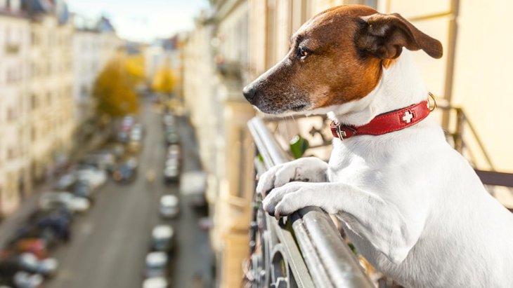 ペット可のマンションで犬をベランダに出しても大丈夫?