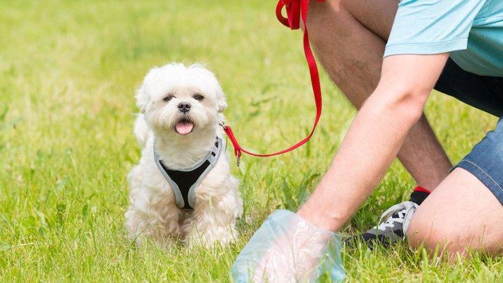 犬の「うんち」から分かる体調不良サイン5つ