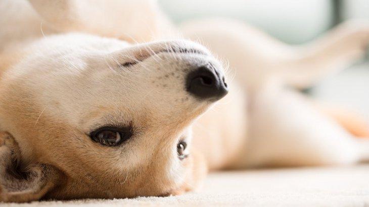 『気分屋な犬』の特徴4選!ただの気まぐれでやっている行動とは?