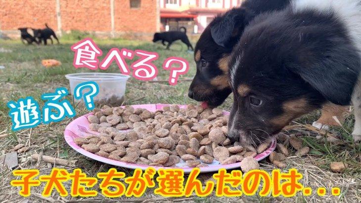 わんぱく子犬達が大ピンチ!?野良犬界の『ルール』に感心