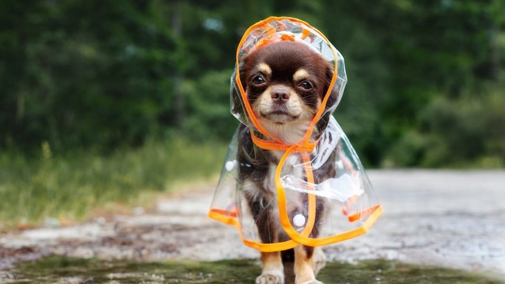 雨の日の犬の散歩で使うべき4つのグッズ