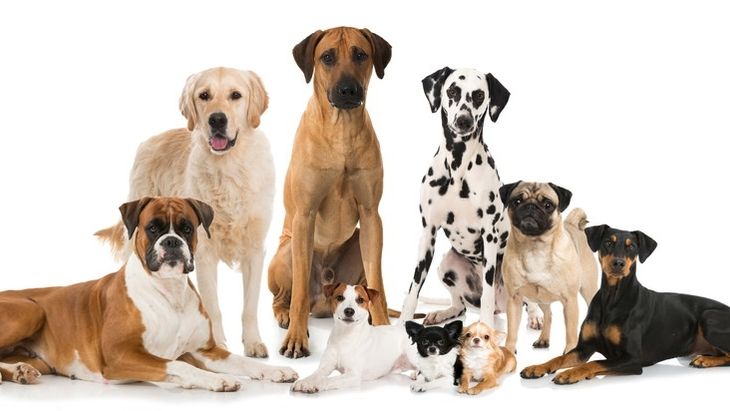 犬種別の「特性による問題行動」の可能性を知っておこう