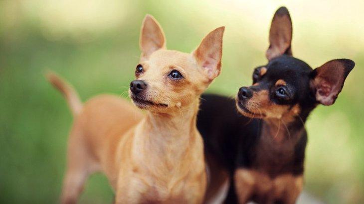 犬が集中している時にする仕草4選