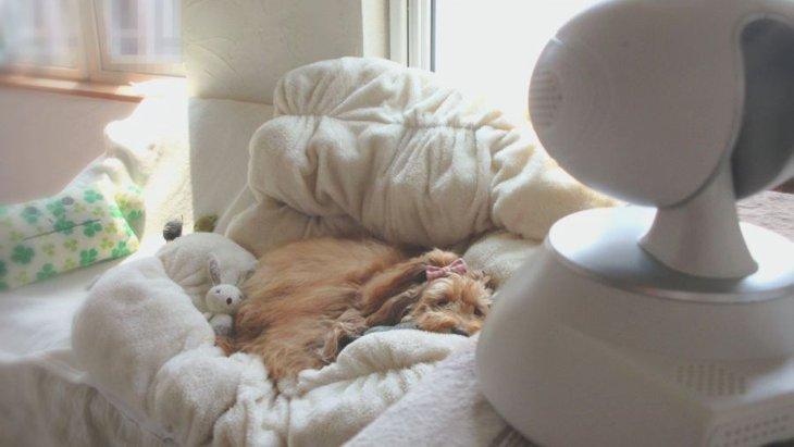 愛犬のお留守番の様子が分かる!ペット見守りカメラ「ポチカメ」をレビュー♪