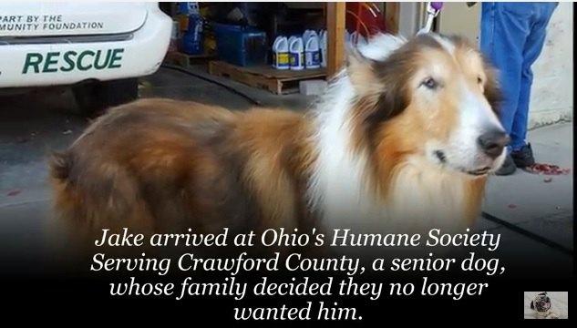 「もう必要ない」と家族にアニマル・シェルターに持ち込まれた老犬