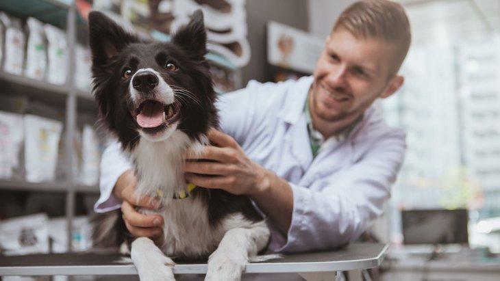 信頼できる獣医師の特徴とは?どこの病院を選べばいいの?