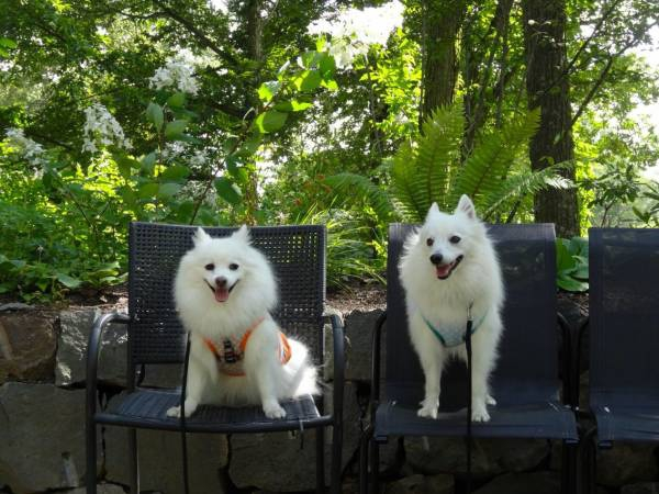 愛犬を連れて萌木の村、清里の森の中に広がる癒しのスポット!