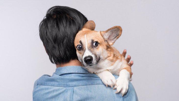 犬の『トラウマ』になってしまう2つの物事!愛犬を守る方法は?
