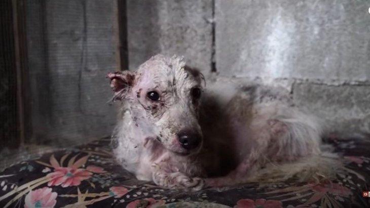鶏小屋に閉じ込められ放置…傷だらけの犬が健康を取り戻すまで