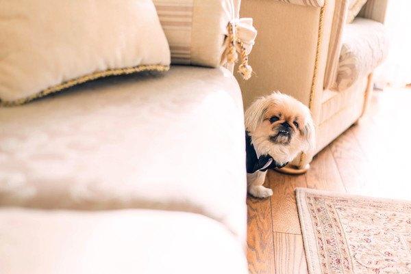 犬が粉薬を飲まない…そんな時にできる簡単な方法!