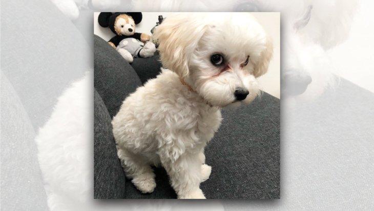 「今は反省している」表情ですべてを語る犬が話題