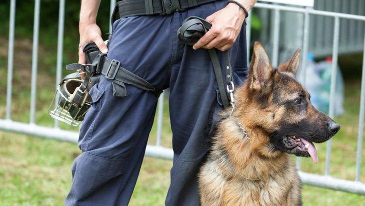 知っているようであまり知らない警察犬の豆知識