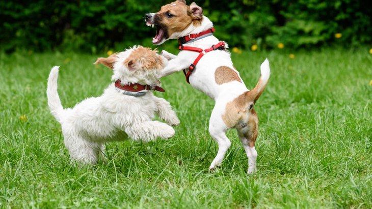 犬が相手の犬の足を噛む5つの心理