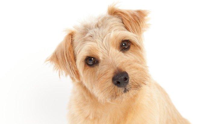 犬が『飼い主以外に興味を持っている』時にする仕草や行動5選