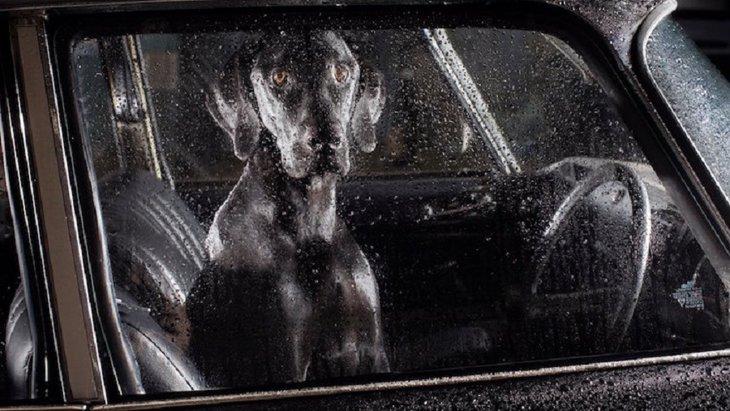 「いつ終わるとも知れない孤独」車内で留守番中の犬達の不安な表情