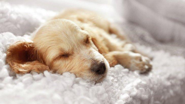 『睡眠不足の犬』の特徴2選!行動や体の変化を見極めるのが大切