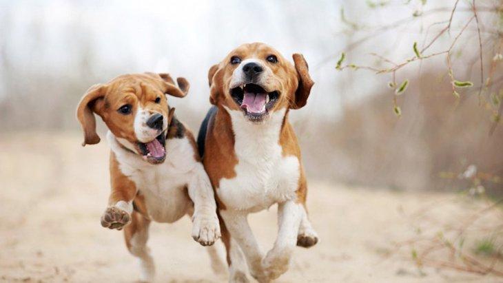 犬に嫌われる犬の特徴5つ